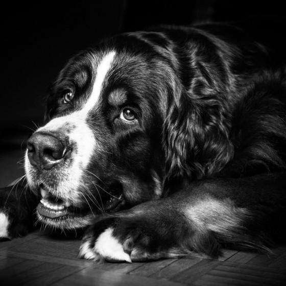 photographie portrait animaux